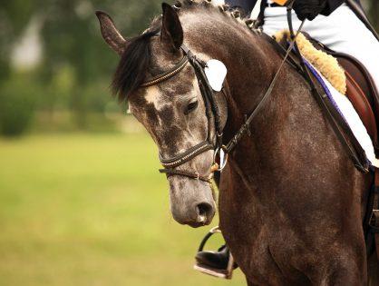 Equine Career Opportunities
